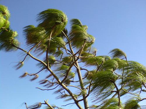 El viento es su mejor amigo para ahorrar energía