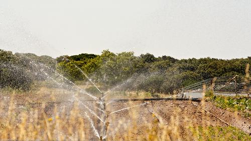 Uso de aspersores para ahorrar agua en la agricultura